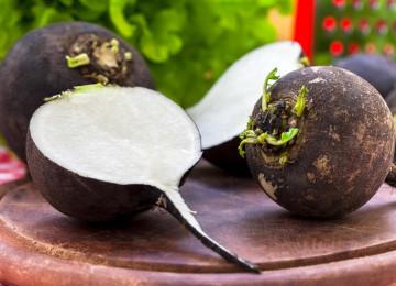Редька черная (лат. Raphanus) – полезные свойства и как их можно применять