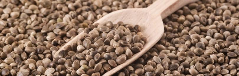Семена конопли – как принимать