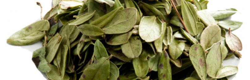 Листья брусники – лечебные свойства и противопоказания