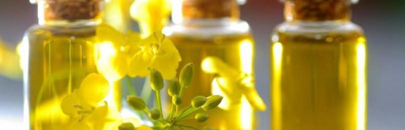 Что такое рапсовое масло, вред и польза