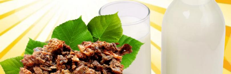 Прополис с молоком – лечебные свойства, как принимать