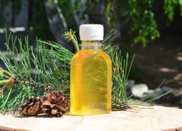 Кедровая живица – лечебные свойства и противопоказания
