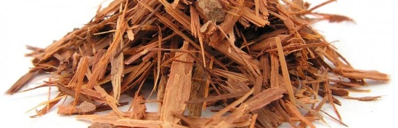 Кора муравьиного дерева – инструкция по применению