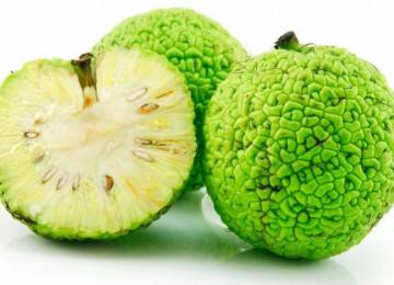 Адамово яблоко – лечебные свойства и применение маклюры
