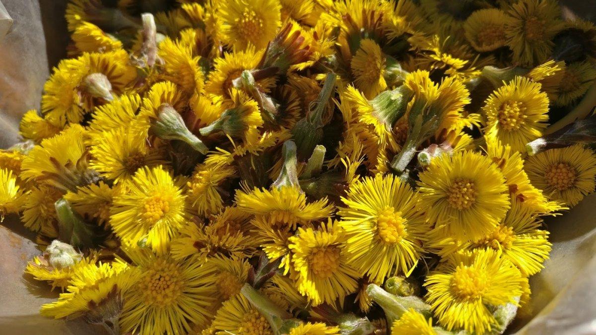 Цветки собраны для засушивания на зиму