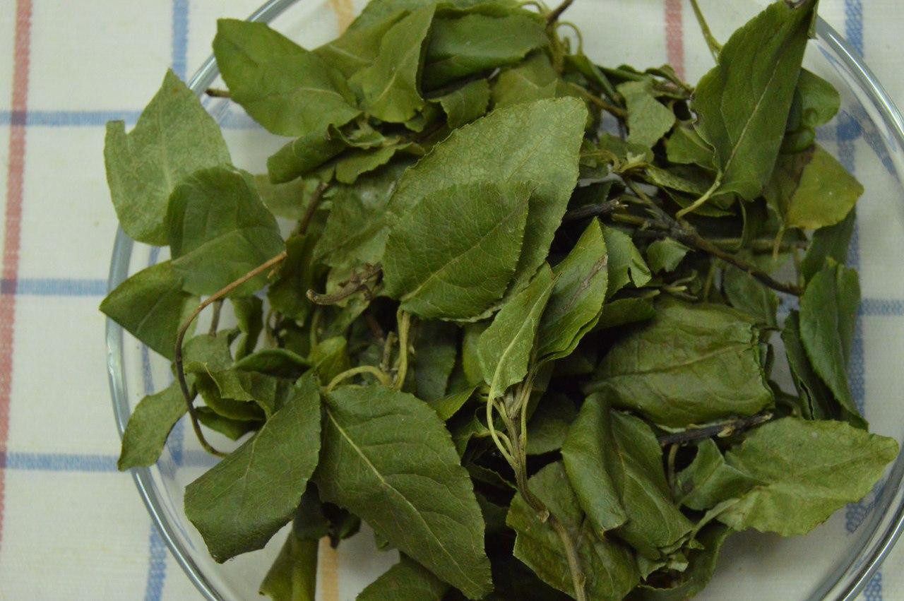 Листья Ортилии