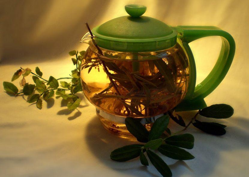 Чай из ортилии