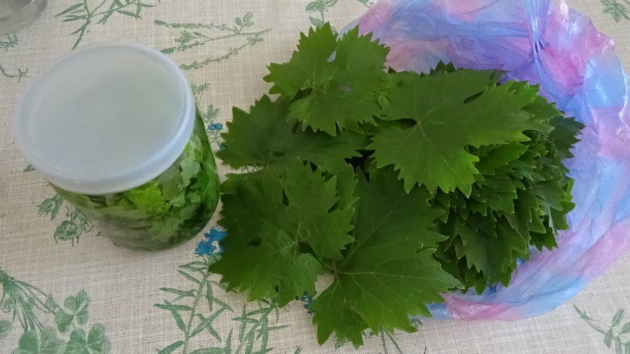 Консервированные листья винограда