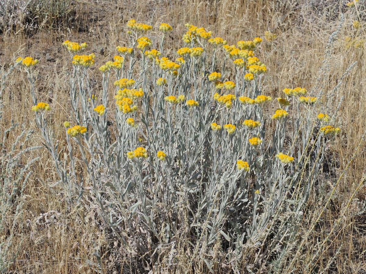 последние фото и описание лечебных трав казахстана относится