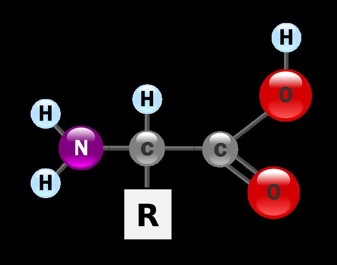Аминокислоты для человека