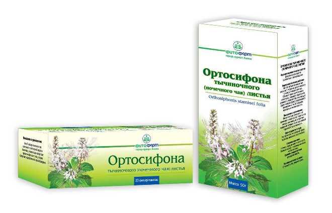 Ортосифонт